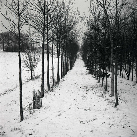 06 avenue of trees in snow