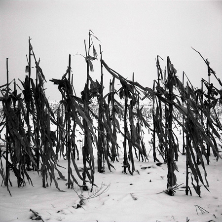 08 corn soldiers